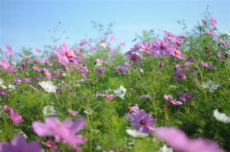 wild flower garden ideas photograph planting wildflowers