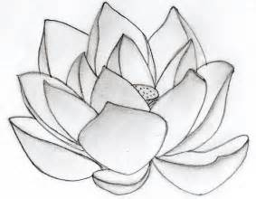 How To Draw A Lotus Flower Drawing The Lotus Flower Apps Directories