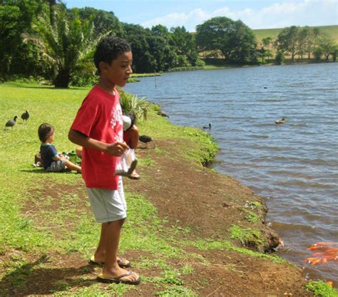 Hoomaluhia Botanical Garden Fishing Top 15 Activities For On Oahu Hawaii
