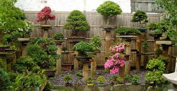 Black Patio Bench Beautify Your Garden Decor With Bonsai Plants Outdoor