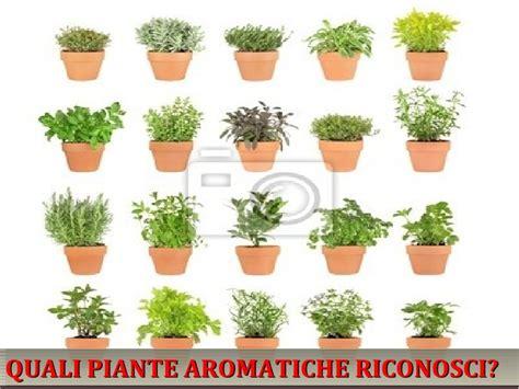 giardino piante aromatiche le piante aromatiche