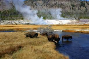 yellowstone national park insider s guide to yellowstone where to trek and geyser