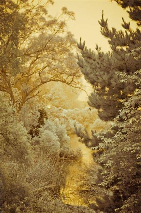 zyla autumn poet wordlesswednesday winter golds booknvolume
