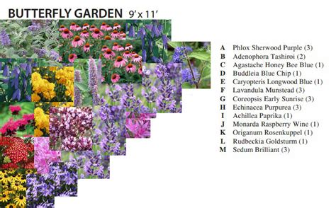 butterfly garden plan cottage garden living