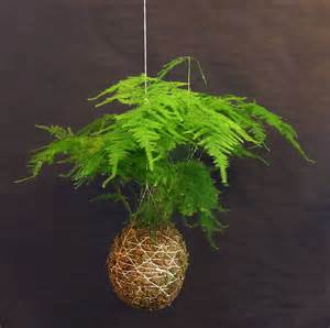 Foliage Plants For Hanging Baskets - plants amp flowers 187 asparagus fern