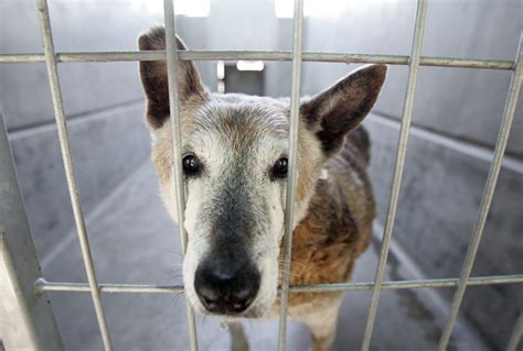 pet stores in los angeles that sell puppies l a council votes to ban stores from selling non rescue dogs cats l a now los