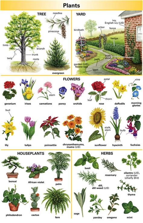 Garden Of Dictionary Tree Definition For Language Learners From