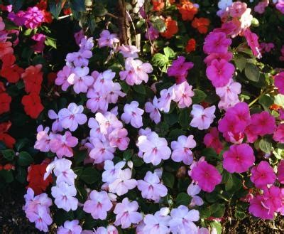 outdoor plants that don t need sunlight flowers that don t need much sun with pictures ehow
