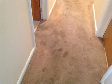 rug cleaning state college pa carpet cleaning state college pa carpet cleaner carpet cleaner state college pa