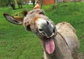 imagenes de amor chistosos del burro shrek frases sobre burros