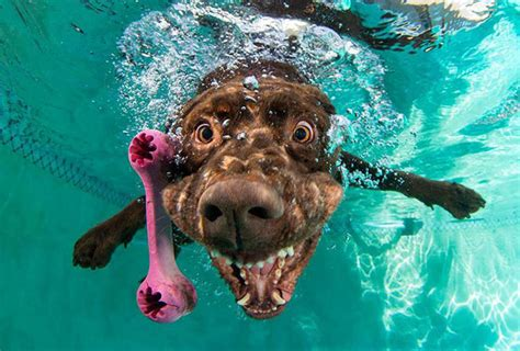 puppies in water amazing of dogs diving water for balls the meta picture