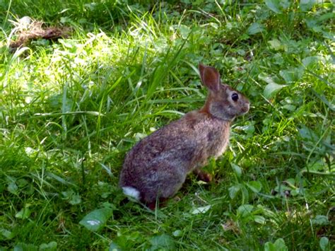 Backyard Wildlife Habitat by Your Backyard Wildlife Habitat Hester The Bunny And I