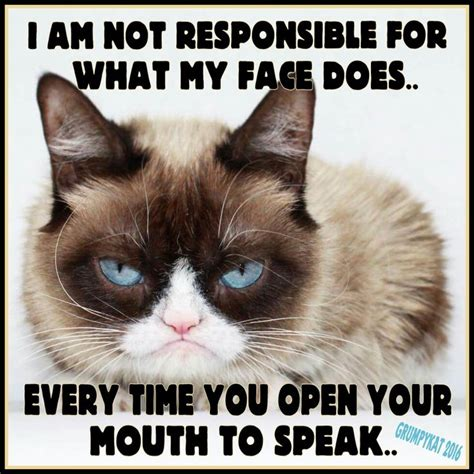 Original Grumpy Cat Meme - 87 best my grumpy cats 2014 through 2018 images on