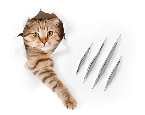 Cat Scratching paws need claws prevent scratching without declawing