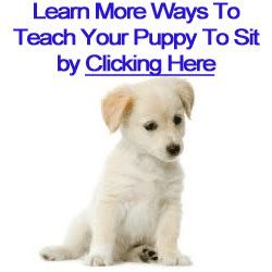 how to teach a puppy to sit how to teach a puppy to sit