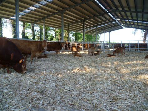 associazione mantovana allevatori linea vacca vitello a mantova iz informatore zootecnico