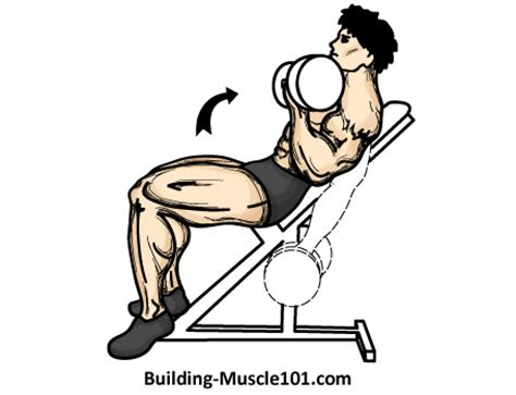 incline bench curls the incline dumbbell curl