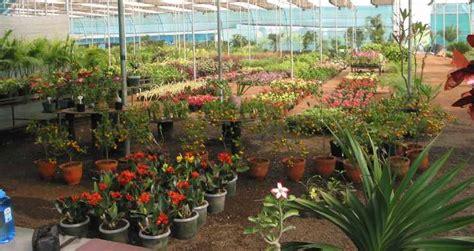 indiaplantscom  enchanted garden
