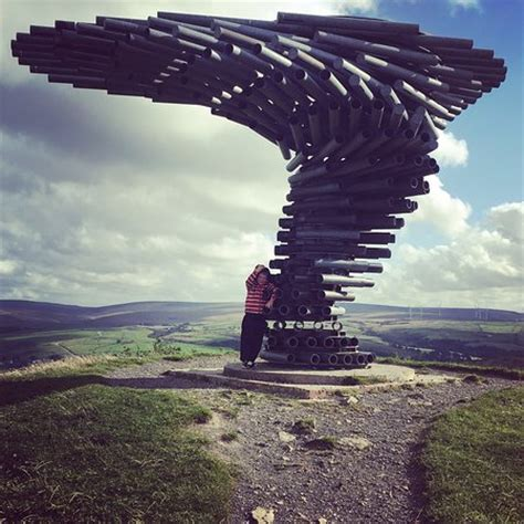 trees burnley singing ringing tree burnley picture of the singing