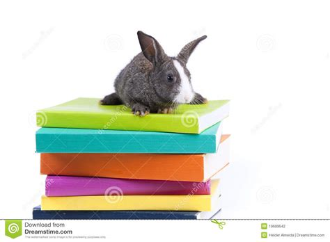 rabbit books rabbit reading books stock photography image 19689642