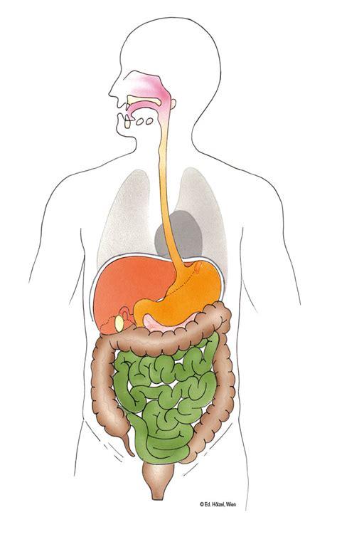 die inneren organe des menschen vom leben 1 grafiken