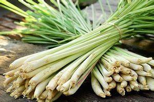 Jual Bibit Serai Wangi tanaman serai wangi daftar harga terbaru terlengkap