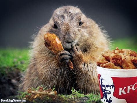 groundhog day pics groundhog pictures freaking news