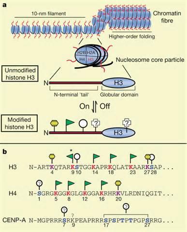 protein n terminus n terminus