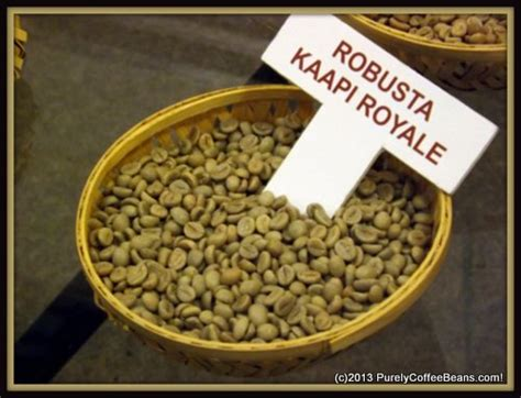 Coffee Robusta robusta coffee beans smaller more caffeine and popular purelycoffeebeans reviews