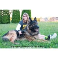 german shepherd puppies for free in pa german shepherd puppies and dogs for sale adoption in pennsylvania freedoglistings