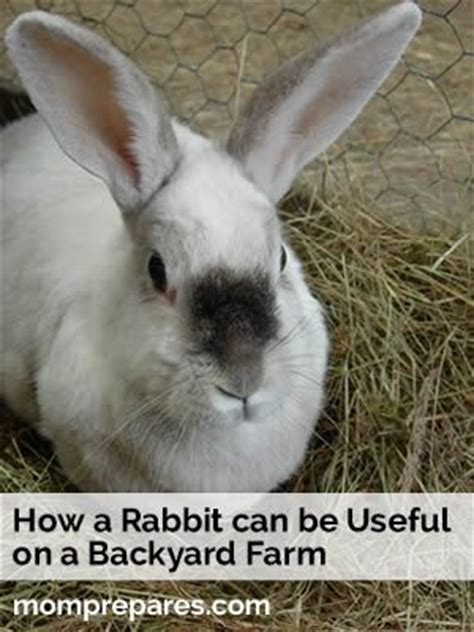 raising meat rabbits your backyard 29 best dwarf bunnies images on pinterest