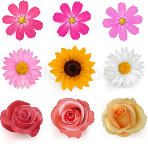 Set Flower big set of beautiful colorful flowers vector illustration