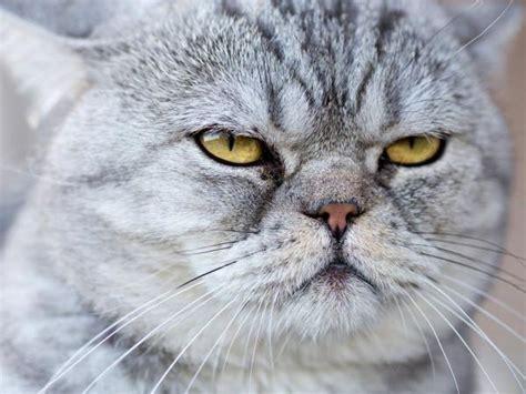 imagenes geniales de gatos im 225 genes de gatos para perfil de whatsapp fondos