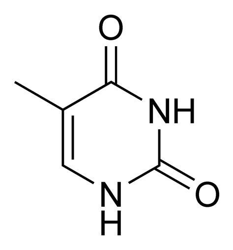 sträucher file thymine chemical structure png wikimedia commons