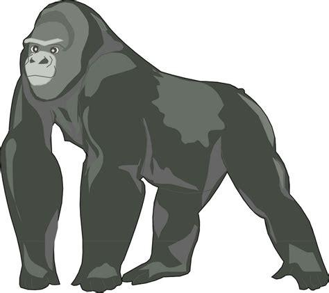 Karpet Karakter 12cm silverback mountain gorilla gorilla clipart explore pictures