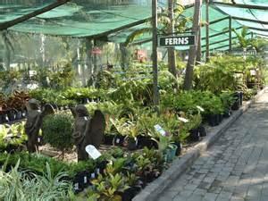 south africa nurseries