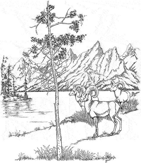 country landscape coloring page woods landscape coloring pages google search landscape