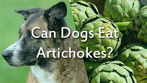 can dogs eat artichokes can dogs eat artichokes pet consider