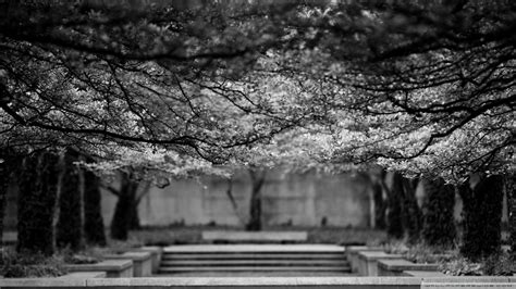 wallpaper black and white nature black and white nature trees wallpaper allwallpaper in