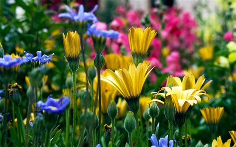 color flower different color flowers flower wallpapers