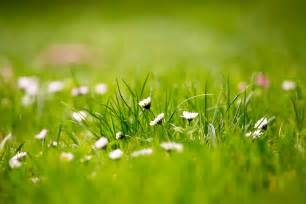 Wallpaper Collection by 12 Beautiful Green Grass Field Hd Wallpapers