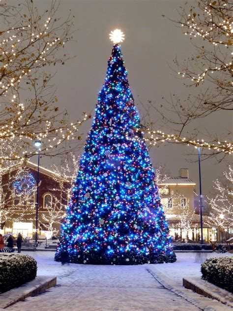 beautiful christmas tree love christmas lights boston