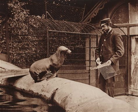 does lincoln park zoo elephants zoo me dna and captivity the collective picture