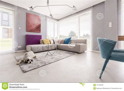 dog house interior dog in a house interior stock photo image of cushions 101303258