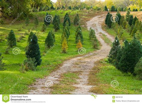 christmas tree road stock photo image 66018122