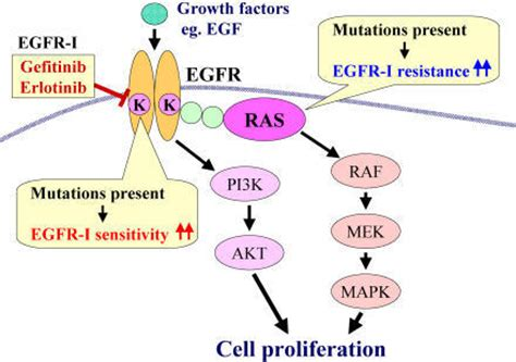 egfr inhibitors compare egfr inhibitors pmed 0020013 g001 gene mutations in lung cancer promising