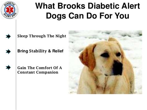 diabetic alert dogs diabetic alert
