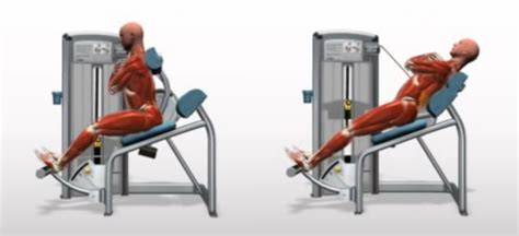 chair back extension muscles machine lumbar extension bodybuilding wizard