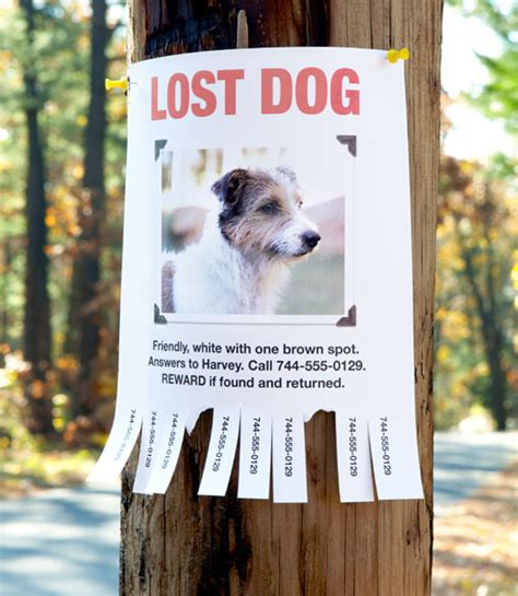 how to find a puppy finding a lost pet how to find a missing cat or
