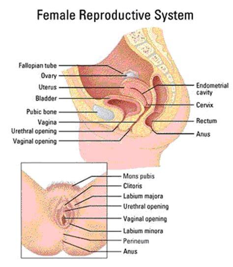 sexual diagram erin stewart